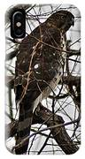 Sharp Shinned Hawk IPhone Case