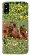 Shetland Pony And Foal Playing IPhone Case