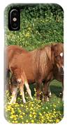 Shetland Pony With Foal Twins IPhone Case