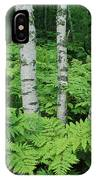 Silvery Birch Bark Gleams From A Bed IPhone Case