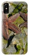Simply Starfish IPhone Case