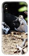 Sleepy Arizona Cows IPhone Case