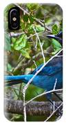 Small Blue Jay Of California IPhone Case