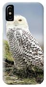 Snowy Owl At Boundary Bay Vancouver IPhone Case