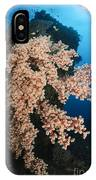 Soft Coral On The Liberty Wreck, Bali IPhone Case