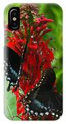 Spicebush Swallowtails Visiting Cardinal Lobelia Din041 IPhone Case