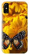 Spotted Butterfly On Yellow Mums IPhone Case