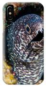 Spotted Moray Eel IPhone Case