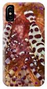Spotted Periclimenes Colemani Shrimp IPhone Case