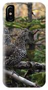 Spruce Grouse IPhone Case
