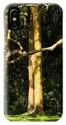 Stand Of Rainbow Eucalyptus Trees IPhone Case