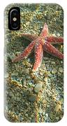Starfish In Shallow Water IPhone Case