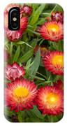 Strawflower Helichrysum Sp Red Variety IPhone Case