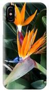 Strelitzia Reginae IPhone Case
