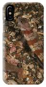 Striated Goby And Blind Shrimp, North IPhone Case
