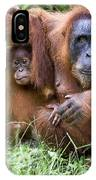 Sumatran Orangutans IPhone Case