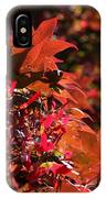 Sunlight Autumn Leaves IPhone Case