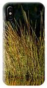 Sunlight On Grass Merritt Island Nwr IPhone Case