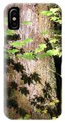 Sunlight Reaching The Forest Floor IPhone Case
