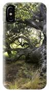 Sunstar Oak IPhone Case