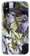 Swallows In Pooler IPhone Case