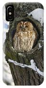 Tawny Owl Strix Aluco In Nest Hole IPhone Case
