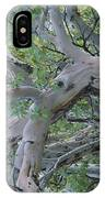 Texas Madrone Tree Limbs IPhone Case