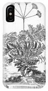 Thapsia Major Latifolia IPhone Case