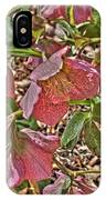 The Lenten Rose IPhone Case