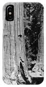 The Mariposa Grove In Yosemite IPhone Case