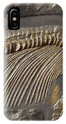 The Ribs And Spine Of Ichthyosaur IPhone Case