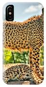 Three Cheetahs IPhone Case