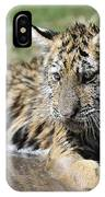Tiger Cub In A Puddle IPhone Case