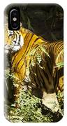 Tiger In The Rough IPhone Case