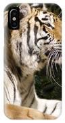 Tiger Observations IPhone Case