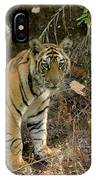 Tiger Panthera Tigris Six Month Old IPhone Case