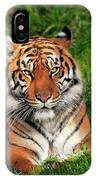 Tiger Sitting In The Grass IPhone Case