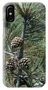 Torrey Pine Cones IPhone Case