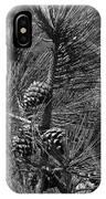 Torrey Pine Cones In Black And White IPhone Case