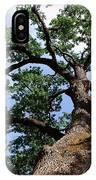Towering Oak In Summer IPhone Case