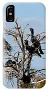 Tree Of Florida Cormorants IPhone Case