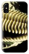 Trilobite Fossil IPhone Case