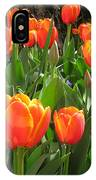 Tulip Time IPhone Case