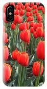 Tulips At Boston Public Garden IPhone Case