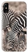 Two Zebras Grazing Together Kenya IPhone Case