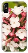 Viburnum Carlesii 'charis' IPhone Case