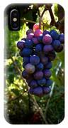 Vineyard 31 IPhone Case