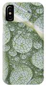 Water Droplets On Leaf, Annapolis IPhone Case