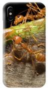 Weaver Ant Oecophylla Longinoda Group IPhone Case