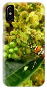 Webworm Moth IPhone Case